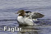 fåglarl